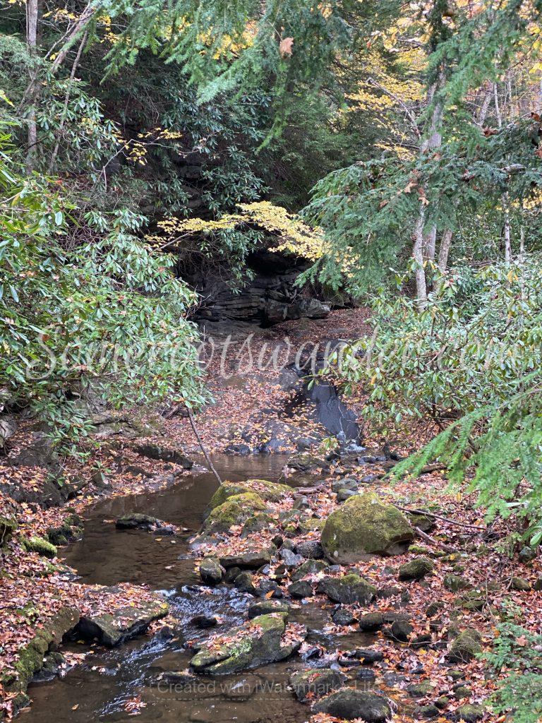 Creek by fallingwater