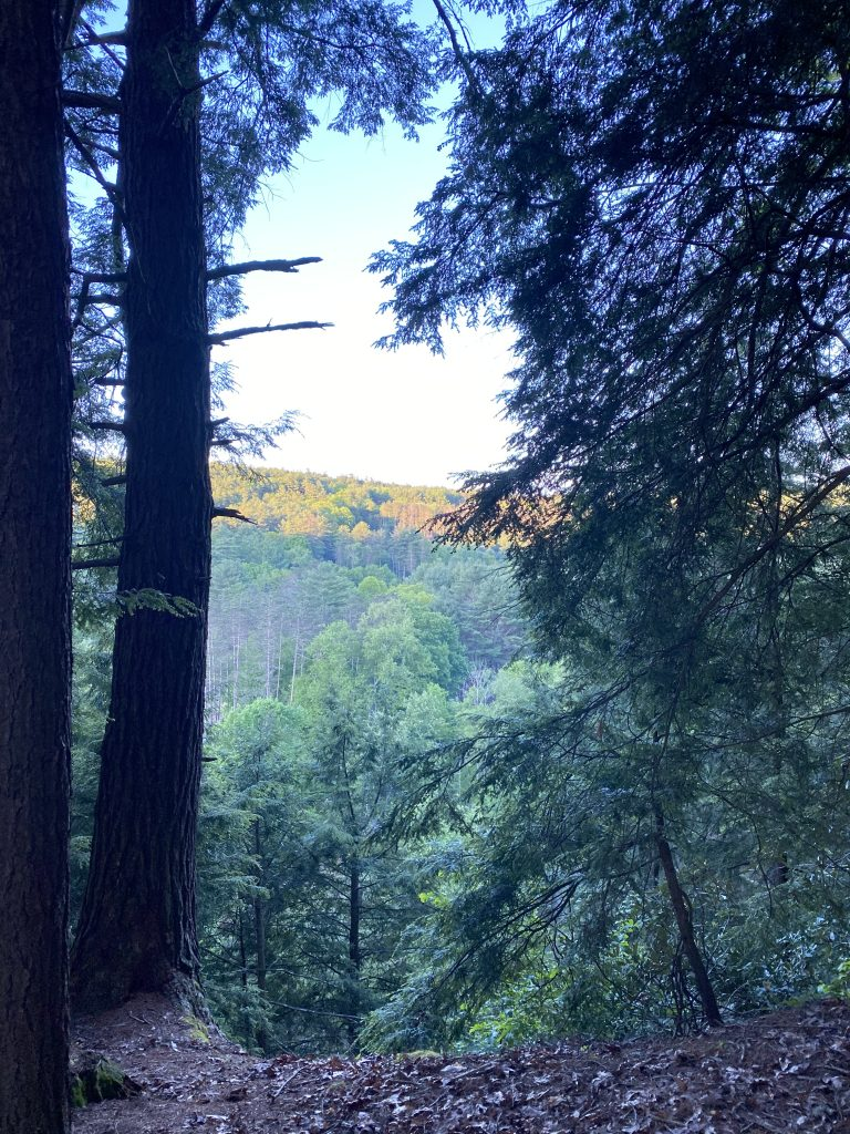Camping Trip to Cook Forest State Park Pennsylvania